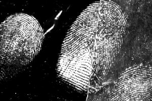 Latent fingermarks from a male donor developed on aluminium foil. Image provided by Xanthe Spindler