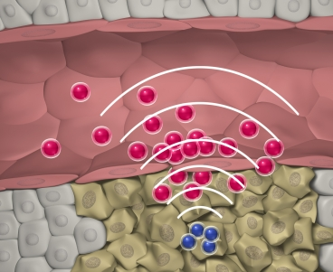 MIT researchers designed nanoparticles that can quickly locate a tumor, then set off a chemical reaction that attracts larger swarms of drug-delivering nanoparticles to the site.