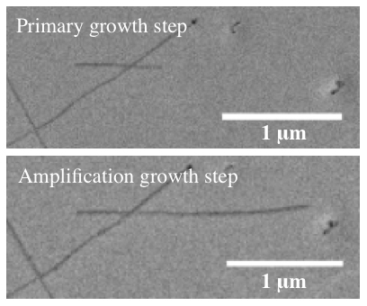 These images show a single carbon nanotube before and after amplification, a process developed at Rice University seen as key in the development of armchair quantum wire. Such a wire would transmit electricity over great distances with virtually no loss. (Credit: Barron Lab/Rice University)