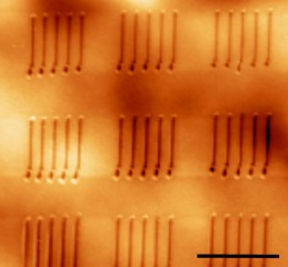 (Courtesy Suenne Kim)