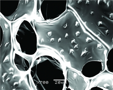 A scanning electron microscope (SEM) image of nanowire-alginate composite scaffolds. Star-shaped clusters of nanowires can be seen in these images.