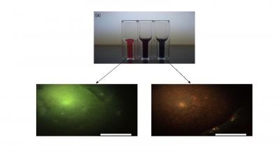 Gold nanoparticle solutions and corresponding phantom images. Top: (a) Three nanoparticle solutions of varying shape and size (left to right: gold nanospheres, short gold nanorods, long gold nanorods). Bottom: Darkfield images of brain-simulating phantoms containing (b) 60nm gold nanospheres and (c) gold nanorods. (Scale bar=50 μm)