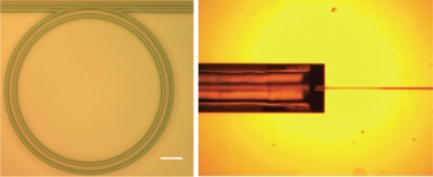 "Researchers have created a tiny ""microring resonator,"" at left, small enough to fit on a computer chip. The device converts continuous laser light into numerous ultrashort pulses, a technology that might have applications in more advanced sensors, communications systems and laboratory instruments. At right is a grooved structure that holds an optical fiber leading into the device. (Birck Nanotechnology Center, Purdue University)"