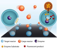 The ultra small nanoreactors have walls made of lipids. During their fusion events volumes of one billionth of a billionth of a liter were transferred between nanoreactors allowing their cargos to mix and react chemically. We typically carried out a million of individual chemical reactions per cm2 in not more than a few minutes.