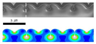 Researchers at Brown University and in Korea used focused ion beams to extract a cross-section of compressed gold nanofilm. When tips of regular, neighboring folds touched, nanopipes were created beneath the surface.  Credit: Kyung-Suk Kim lab, Brown University