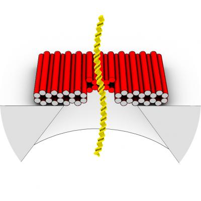 "This illustration shows how a DNA origami nanoplate with a central aperture can serve as a smart lid or ""gatekeeper"" for a solid-state nanopore sensor. Researchers at the Technische Universitaet Muenchen have demonstrated that this arrangement can be used to filter biomolecules by size or to ""fish"" for specific target molecules by placing single-strand DNA receptors inside the aperture as ""bait."" With further research, they suggest, it might be possible to use such single-molecule sensors as the basis of a novel DNA sequencing system.