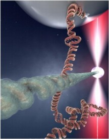 "After a DNA molecule breaks, the broken ends search for an intact DNA region with the same sequence in order to get repaired. The image shows an artist impression of the contact point between a RecA-protein DNA molecule (the ""broken end""; horizontal) and a DNA molecule (vertical), where it is probed whether both molecules have the same sequence. If they do not, they will break the contact. If the same sequence is found however, the molecules stably bind and the repair process is initiated. The present study discovered the mechanism of the recognition process from dual molecule experiments where individual DNA molecules can be manipulated with beads.