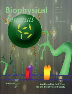 Radhakrishnan's work was featured on the cover of the Biophysical Journal.