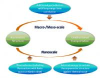 At macro-/meso-scale, an additional perturbation with long-range time correlation is required for unidirectional transport in asymmetric systems. However, at nanoscale, because thermal noise has a significantly long autocorrelation time, unidirectional transport is feasible in asymmetric systems, even in the situation that thermal noise is the only perturbation. In such a situation, extra energy is required to sustain the asymmetry of the system against thermal noise.