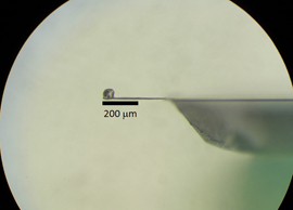This image shows a microscopic sample of a high-temperature superconductor glued to the tip of a cantilever. To study the magnetic properties of the sample, scientists applied a magnetic field and measured the torque that was transferred from the sample to the cantilever.