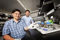 Zhen (Jason) He, assistant professor of civil engineering (left), and Junhong Chen, professor of mechanical engineering, display a strip of carbon that contains the novel nanorod catalyst material they developed for microbial fuel cells.