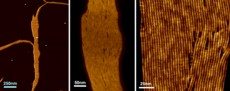 Atomic force microscopy images of artificial ion channels created by scientists. The images are of the same sample, with increasing magnification. Credit: Bing Gong, University at Buffalo