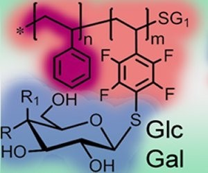 Researchers from the University of Jena (Germany) designed glycopolymeric materials with tailored properties to independently study the parameters that impact cellular uptake.