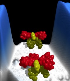 This illustration shows the structure of the molecular motors. (Credit: Saw-Wai Hla)