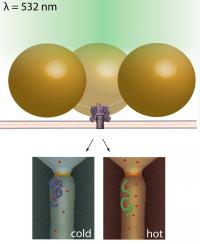 By tethering gold nanoparticles (large spheres in top image) to the nanopore (violet), the temperature around the nanopore can be changed quickly and precisely with laser light, allowing scientists to distinguish between similar molecules in the pore that behave differently under varied temperature conditions.