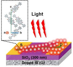 Schematic diagram of single-crystalline nanowire organic phototransistors