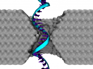An illustration of a single-stranded DNA homopolymer translocating through a silicon nitride nanopore.Credit: Robert Johnson
