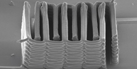 Photo by Jennifer Lewis