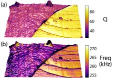 A 4.5μm x 9μm contact resonance image of the cryotomed surface of an 80/20 polypropylene/polystyrene blend. The calculated Quality factor painted on the rendered topography is shown in (a) and contact resonance f0 on topography is shown in (b). The PP and PS regions display less contrast in f0 consistent with a small difference in their bulk storage moduli, while the higher contrast in Q between PP and PS is consistent with a large difference in their bulk loss moduli. Adapted from Gannepalli et al. Nanotechnology 22 355705 (2011).
