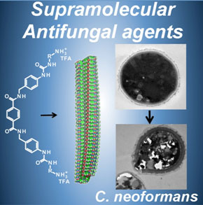 The novel small molecule compounds readily form nanofibers with strong antifungal capability.