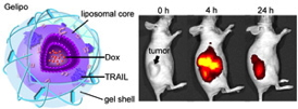 Image shows the structure of the nanoparticle (left), and how the nanoparticles home in on a tumor and shrink it