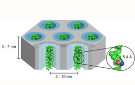 The outcome of the CAREER Award will be new materials with predictable structure and organication on both the molecular scale and nanoscale. A new molecular architecture, dendornized helix bundle assemblies, will be developed under this award. The new molecules are hybrids of highly branched polymers called dendrons, which promote organization of the 2-D hexagonal array structure having dimensions ~2-10nm, and helical peptides that associate into protein-like bundles. The bundles have a discrete height (~7-10nm), and the precise arrangement of atoms in the bundle can be used to create functional materials such as selectively permeable membranes.