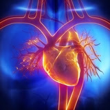 Scientists report building heart tissue that can transmit electrical signals, a key function of cardiac muscle.