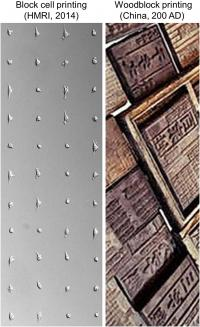 This image shows cells printed in a grid pattern by block cell printing technology (left) and woodblocks used in ancient Chinese printing (right).