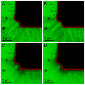 A new in situ transmission electron microscopy technique enabled ORNL researchers to image the snowflake-like growth of the solid electrolyte interphase from a working battery electrode.