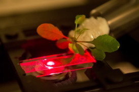 Credit: Bryce Vickmark