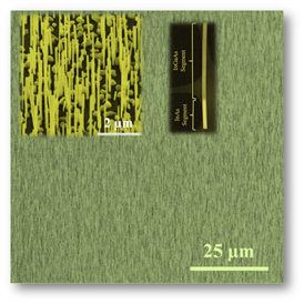A dense array of nanowires grown directly on graphene. The insets show a higher magnification SEM view of the array and a STEM image of a single, axially heterostructured InGaAs/InAs nanowire.
