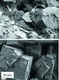 This is a SEM image of stones treated by two different drugs. Above you see altered crystals with a rough surface, below, you see crystal edges still well defined, suggesting limited effect of treatment.