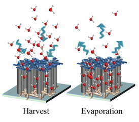 A hygroscopic scaffold created at Rice University is a modified forest of carbon nanotubes that have the ability to harvest water molecules from the air. The water is stored until released either by squeezing the reusable scaffold or until it slowly evaporates back into the atmosphere.Credit: Ajayan Group/Rice University