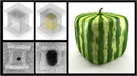 The concept of casting nanoparticles inside DNA molds is very much alike the Japanese method of growing watermelons inside cube-shaped glass boxes. Credit: Harvard's Wyss Institute / Peng Yin
