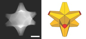 A scanning electron transmission microscope image shows an octopod, left, created at Rice University that has both plasmonic and catalytic abilities. At right is an illustration of the octopod, which has a gold core and a gold-palladium alloy surface. The scale bar is 50 nanometers.