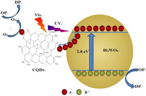 Due to the excellent up-converted photoluminescence (UCPL), photo-induced electron transfer and electron reservoir properties of CQDs, the CQDs/Bi2WO6 composite showed enhanced photo-absorption and charge separation, resulting in excellent photocatalytic performance.