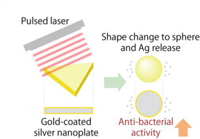 When gold-coated silver nanoplates are irradiated with a pulsed laser, they change shape into a sphere and release silver ions which produces a strong antibacterial effect.