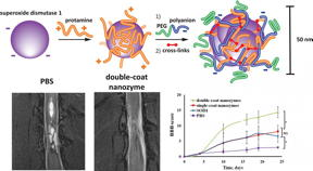 An international science team has developed an innovative therapeutic complex based on multi-layer polymer nano-structures of superoxide dismutase (SOD). The new substance can be used to effectively rehabilitate patients after acute spinal injuries, strokes, and heart attacks.