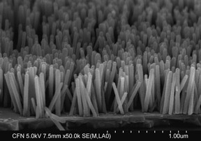 The scientists used a low-temperature approach to grow this nanowire array composed of zinc-oxide crystals. On average, the nanowires have a diameter of 40–50 nanometers (nm) and a length of 500 nm.