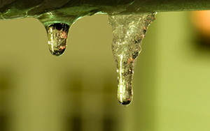 The coexistence of ice and liquid water breaks down at the nanoscale.