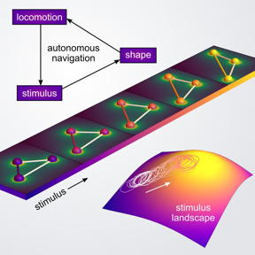 This is a schematic of autonomous navigation mechanism via shapeshifting