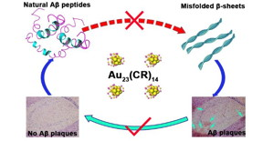 Au23(CR)14 Nanocluster functions in multiple stages of the progression from Aβ monomer to Aβ plaques.