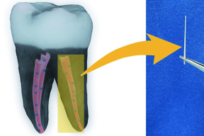 American Chemical Society/Dong-Keun Lee
